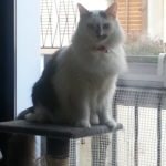 Cat Sitting in Sitges, Spain
