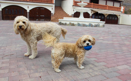 Dog Sitting-In-the-Canary-Islands
